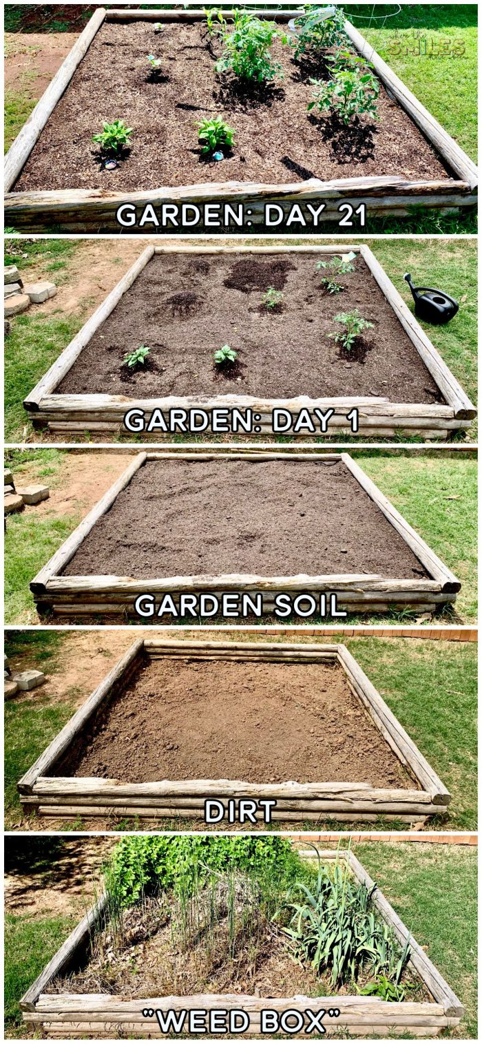 DIY vegetable container garden.